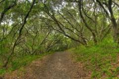 junipero-serra-park